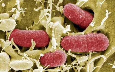 Antibiotic ship paint is leading to more superbugs - Telegraph   BIOSCIENCE NEWS   Scoop.it