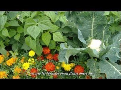 Jardiner au naturel, c'est possible ! - Weedix   pour mon jardin   Scoop.it