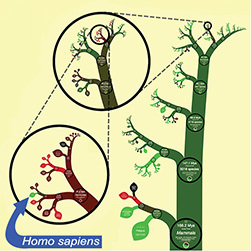 Fractaltastic Evolution   PLOS Biologue   microBIO   Scoop.it