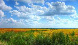 Les terres arables existantes permettraient de nourrir 4 milliards de personnes de plus | Questions de développement ... | Scoop.it