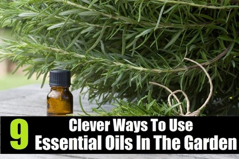 9 Clever Ways To Use Essential Oils In The Garden   Aromatherapy plus   Scoop.it