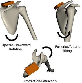 Toward Preventing Shoulder Injuries Using 3-D Motion Analysis   Shoulder Injuries   Scoop.it