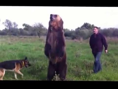 Bear With Me | Videos that make you laugh and cry | Scoop.it