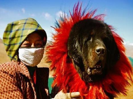 Viajes Aventura tibet: tu viaje diferente y alternativo a tibet | Viajar | Scoop.it