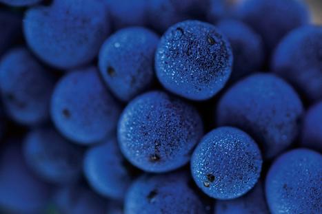 Le réchauffement climatique augmente aussi le degré d'alcool du vin - National Geographic | Curation vins | Scoop.it