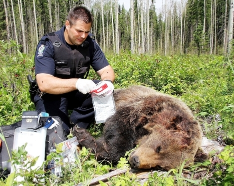 CSI: British Columbia Wildlife | Wildlife Trafficking: Who Does it? Allows it? | Scoop.it
