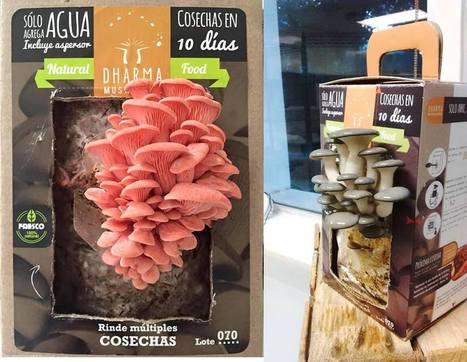 Biotecnología en el hogar: cultivo de hongos comestibles - El Heraldo de Saltillo | Mundo Agroalimentario | Scoop.it