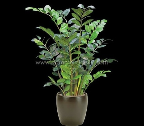 Artificial ZZ Plant | Artificial, Silk Trees Knowledge Center | Scoop.it