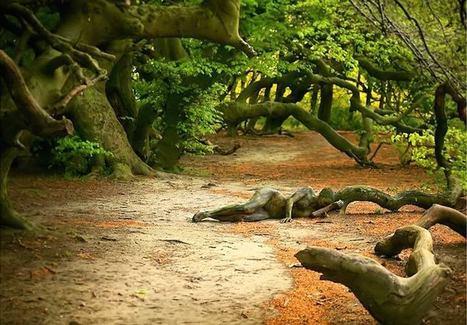 Des bodypainters se cachent dans la nature – Arriverez-vous à tous les trouver ? | The Blog's Revue by OlivierSC | Scoop.it