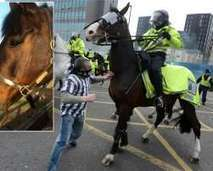 Newcastle United fan who punched police horse jailed | Sport News | Scoop.it