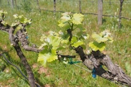 In the Elgin Valley, South Africa — jamie goode's wine blog | Wine from Down Under | Scoop.it