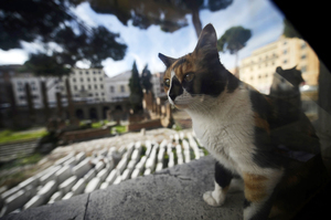 Cat Fight In Rome: Beloved Shelter Faces Closure : NPR | HeritageDaily Archaeology News | Scoop.it