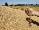 Hausse des prix des céréales : Plan d'action du Ministère de l'Agriculture, de l'Agroalimentaire et de la Forêt   agro-media.fr   Actu Boulangerie Patisserie Restauration Traiteur   Scoop.it