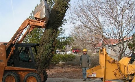 Tree Services in Henderson | Tree Care Services | Scoop.it
