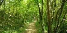 Planète vidéo. Un film pour prendre en compte la biodiversité dans la gestion de la forêt | Comprendre le réel intérêt de produire une agriculture BIO en France plutôt que d'importer des produits présentant un label pas vraiment Certifié. | Scoop.it