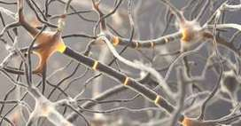 Neurone miroir | Cerveau intelligence | Scoop.it