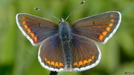 Butterflies spread in hot summers | The Blog's Revue by OlivierSC | Scoop.it