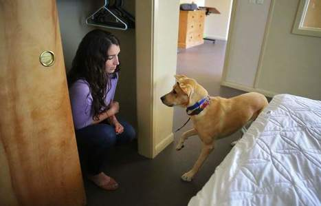 Santa Rosa guide dogs training to help vets with PTSD | Veterans Affairs and Veterans News from HadIt.com | Scoop.it