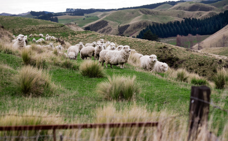 Vanishing Nature: facing NZ's biodiversity crisis | Scoop News | GarryRogers NatCon News | Scoop.it