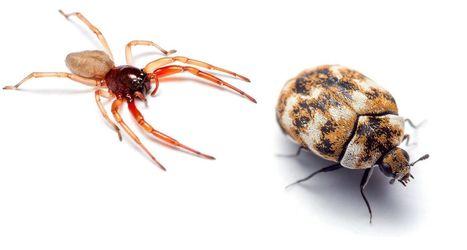 Où se trouve la biodiversité la plus méconnue : chez vous | Biodiversité & Relations Homme - Nature - Environnement : Un Scoop.it du Muséum de Toulouse | Scoop.it