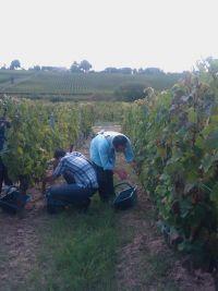 Dernières actus de TéléProTour : Septembre 2011 | Vendanges en Haute Gironde | Bienvenue dans l'estuaire de la Gironde | Scoop.it