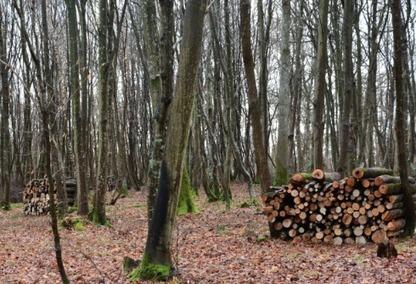 Agriculture innovante, filière bois, rénovation thermique: un potentiel de 340 000 emplois   Forestry   Scoop.it