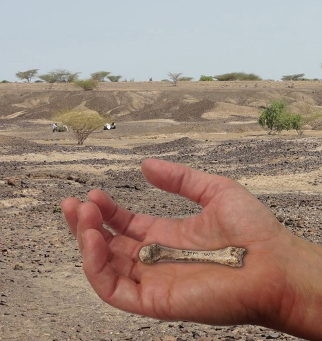 The Archaeology News Network: 1.4 million-year-old fossil human hand bone closes human evolution gap | Aux origines | Scoop.it