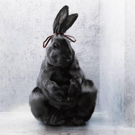 Animal Garbage – Une campagne percutante pour les droits des animaux | Art et Publicité | Scoop.it
