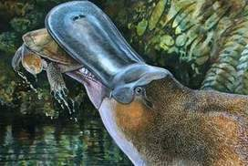 Giant, meat-eating platypus identified - Sydney Morning Herald | Geology | Scoop.it