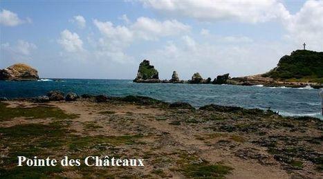 Hiver en Guadeloupe. - Naturaimer. | Gpe | Scoop.it