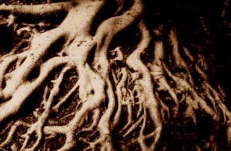 Con vegetales de raíces más hondas, habría menos CO2 en la ... | Agua | Scoop.it