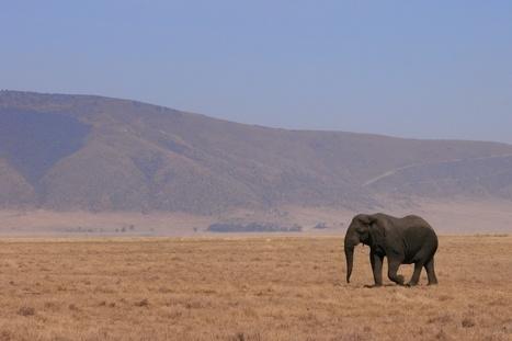 Pourquoi devrait-on sauver les éléphants ? | Transition énergétique locale | Scoop.it