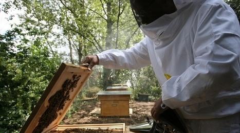 Provence : Les apiculteurs font face à des grosses pertes dans la plaine de la Crau | EntomoNews | Scoop.it