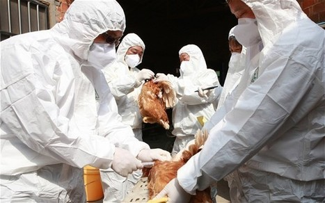 Bird flu could be as deadly as the 1918 Spanish flu pandemic | Virology News | Scoop.it
