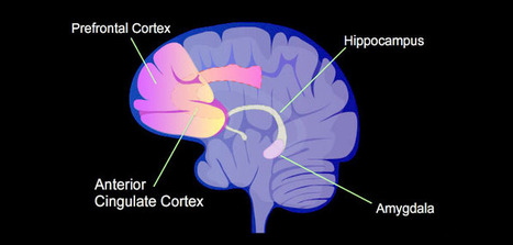 Anxious children have bigger 'fear centers' in the brain | Early Brain Development | Scoop.it