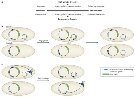 Nature Reviews Genetics: Microbial genome-enabled insights into plant-microorganism interactions (2014) | Plant Pathogenomics | Scoop.it