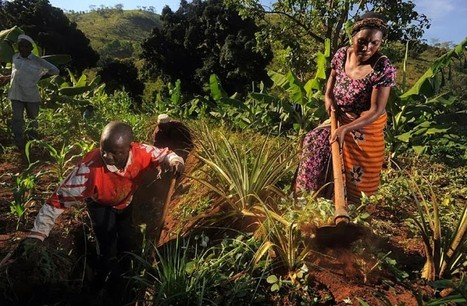 Weather info project aims to help African farmers adapt | CGIAR Climate in the News | Scoop.it