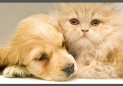 Are dogs better than cats? | Dogs | Scoop.it