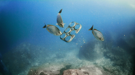 First Ever 100% Edible Six-Pack Ring Feeds Marine Animals Instead of Killing Them | Farming, Forests, Water, Fishing and Environment | Scoop.it