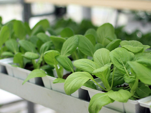 Sky-High Vegetables: Vertical Farming Sprouts In Singapore : NPR   Bio { Cultural } Diversity   Scoop.it