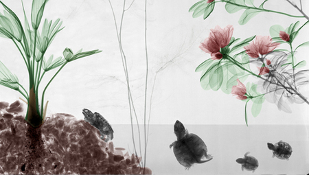 14 beautiful X-ray images that shed a unique light on nature | Integrating Art and Science | Scoop.it