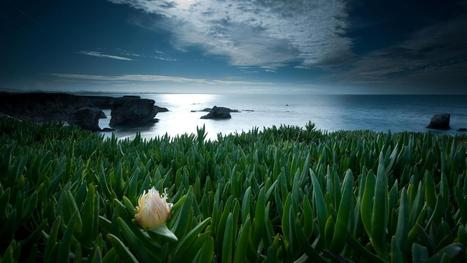 Mangnificent Flowers To The Sea Download Hd Pictures « Pin HD Wallpapers | Flowers Wallpapers | Scoop.it