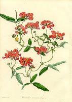 OpenScientist: Cataloging the Herbaria of Europe | Herbaria | Scoop.it
