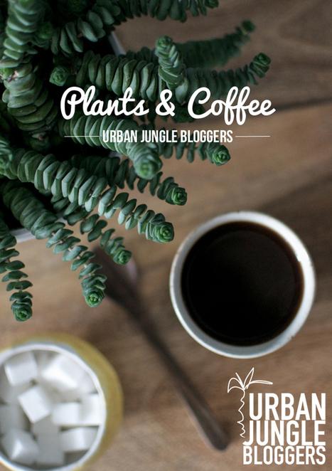 Happy Interior Blog: Urban Jungle Bloggers: Plants & Coffee   Interior Design & Decoration   Scoop.it