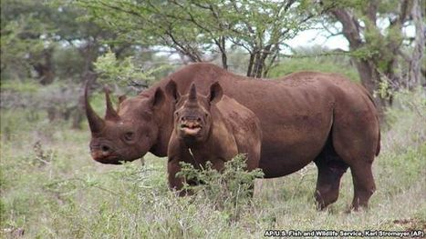 Rhino Poaching Reaches Record Level in 2014 | Endangered Wildlife | Scoop.it
