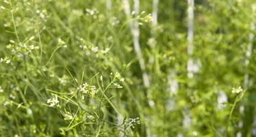 2014/04/04> BE Etats-Unis364> Plantes bioniques : le MIT crée un nouveau champ de recherche à l'interface des nanotechnologies et de la biologie des plantes   Réseau Tela Botanica   Scoop.it
