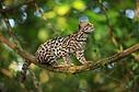 Deep Green Photography Costa Rica Photo Galleries | Deep Green Photography | All about nature | Scoop.it