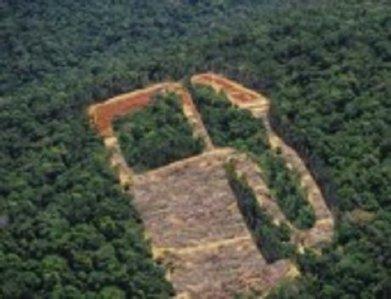 ENQUÊTE - 3 - L'incroyable rente des agrocarburants | Environnement et développement durable, mode de vie soutenable | Scoop.it