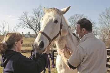 Melanoma Implications in Prepurchase Exams - TheHorse.com | Horse Health | Scoop.it