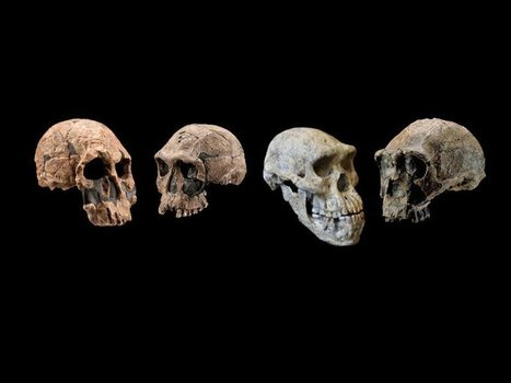 Ability to Adapt Gave Early Humans the Edge Over Other Hominins | Anthropology - Cultural, Forensic, and Linguistic | Scoop.it